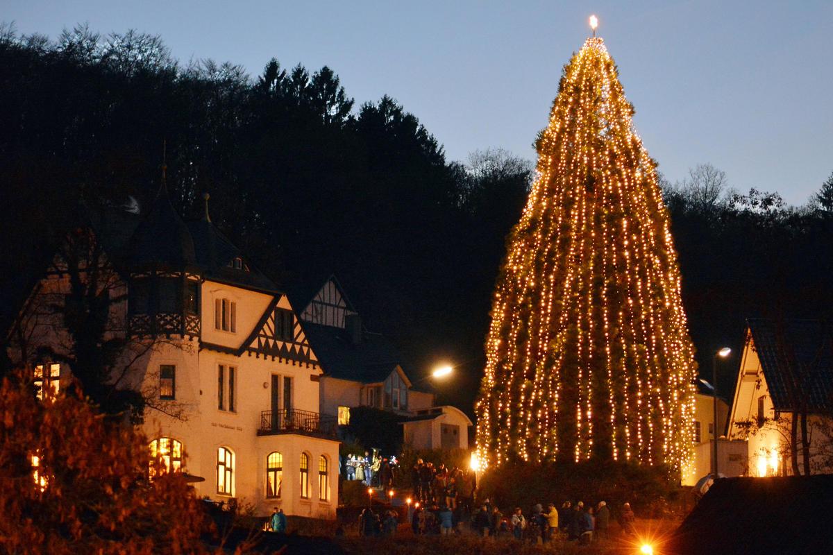 Weihnachtsbaum Villa Bubenzer größter Südwestfalens 22 Meter Natur gewachsen Foto: Henning Prill  27-11-16